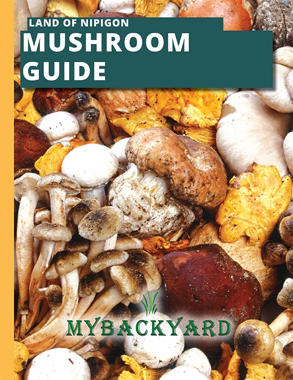 Land of Nipigon Mushroom Guidebook
